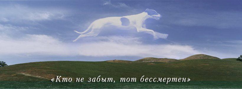 ЗооРитуал Кремирование животных в Киеве